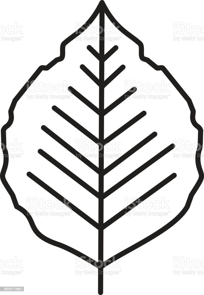 Poplar leaf icon vector art illustration