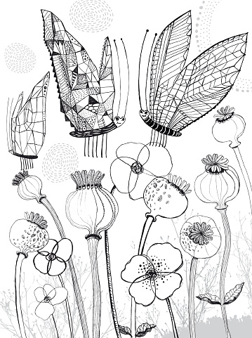 Poppies and butterflies colouring page