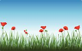 Vector illustration of poppies in the clear morning sky