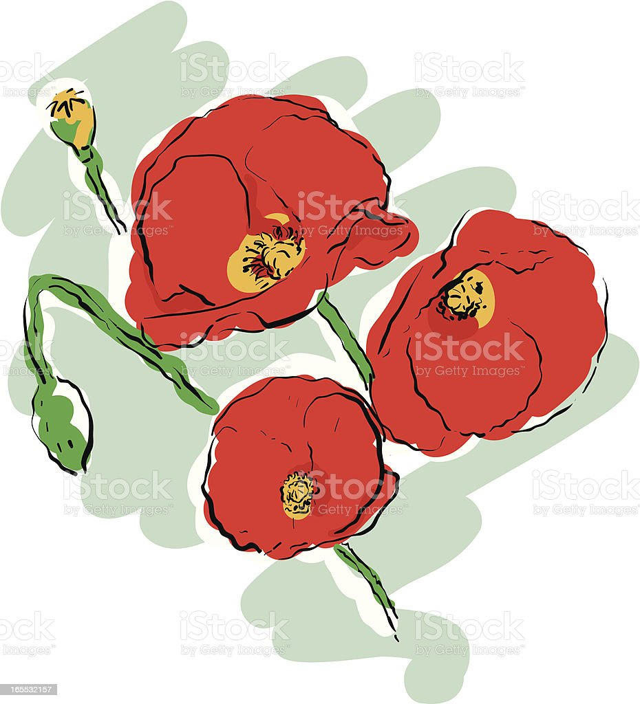 Poppies royalty-free stock vector art
