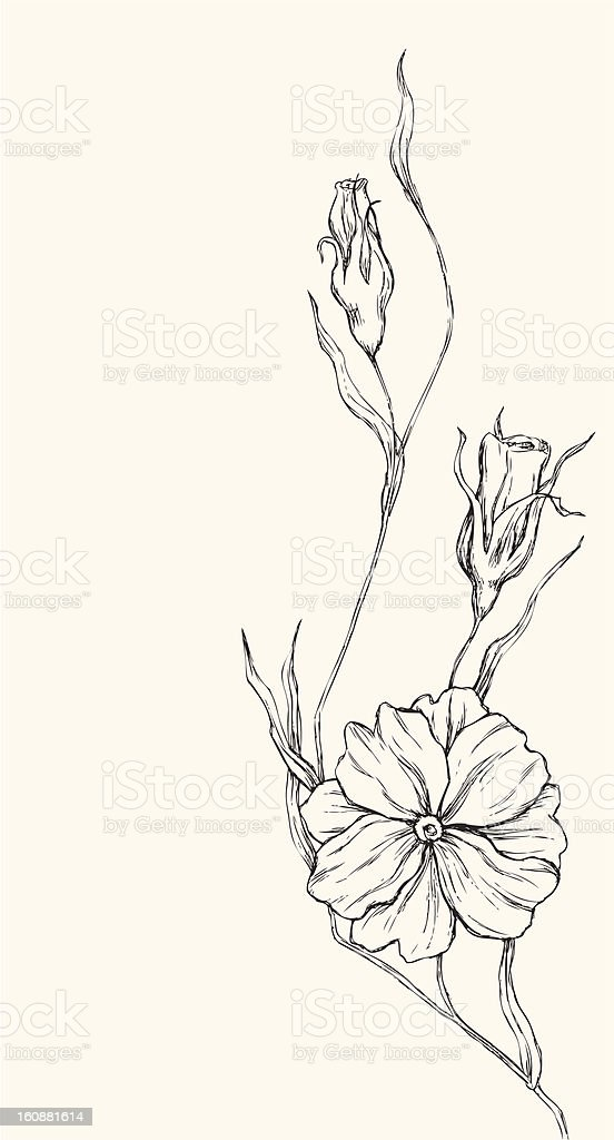 Poppy drawing royalty-free stock vector art