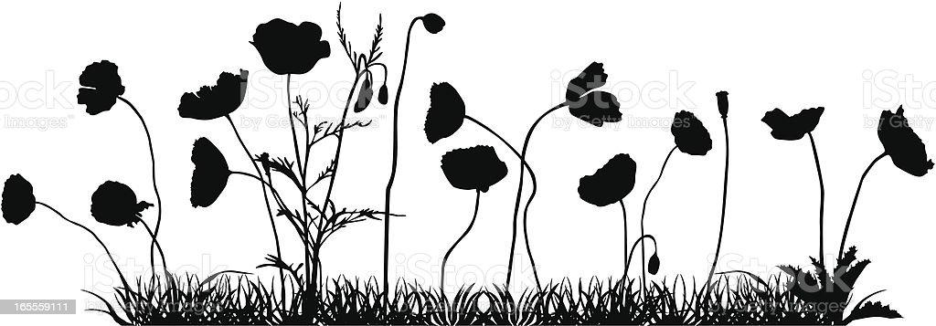 Campo de amapolas - ilustración de arte vectorial