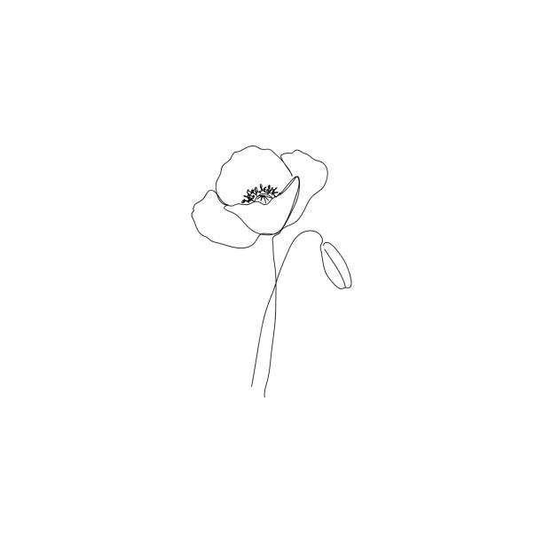 ilustrações, clipart, desenhos animados e ícones de flor de papoula - desenho de linha continous. - papoula planta