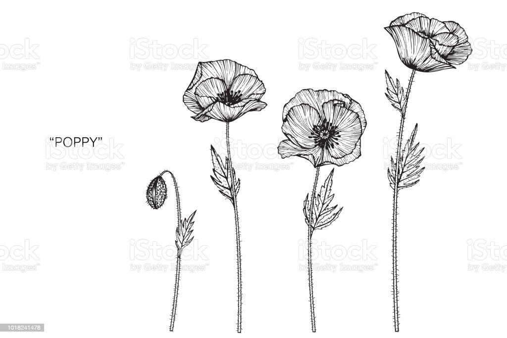 Illustration De Dessin De Fleur De Pavot Noir Et Blanc Avec