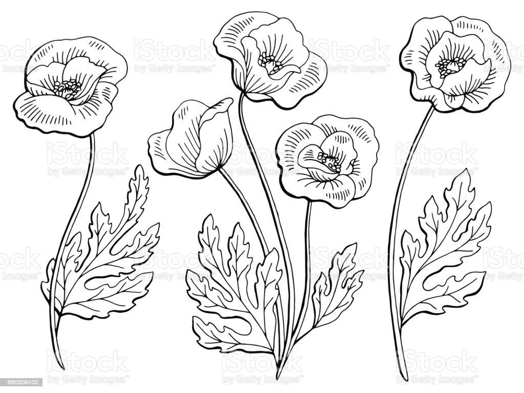 Poppy Flower Graphic Black White Isolated Sketch Illustration Vector