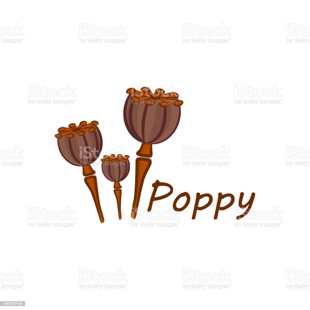 Poppy Flower Icon Design Vector Template Royalty Free Stock