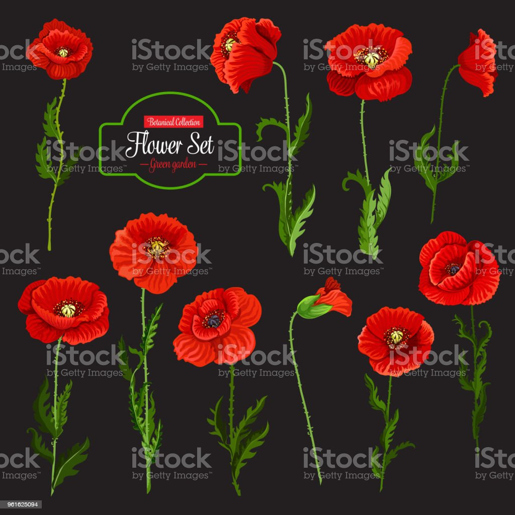 Poppy Flower Icon Of Red Wildflower And Green Leaf Stock Vector Art