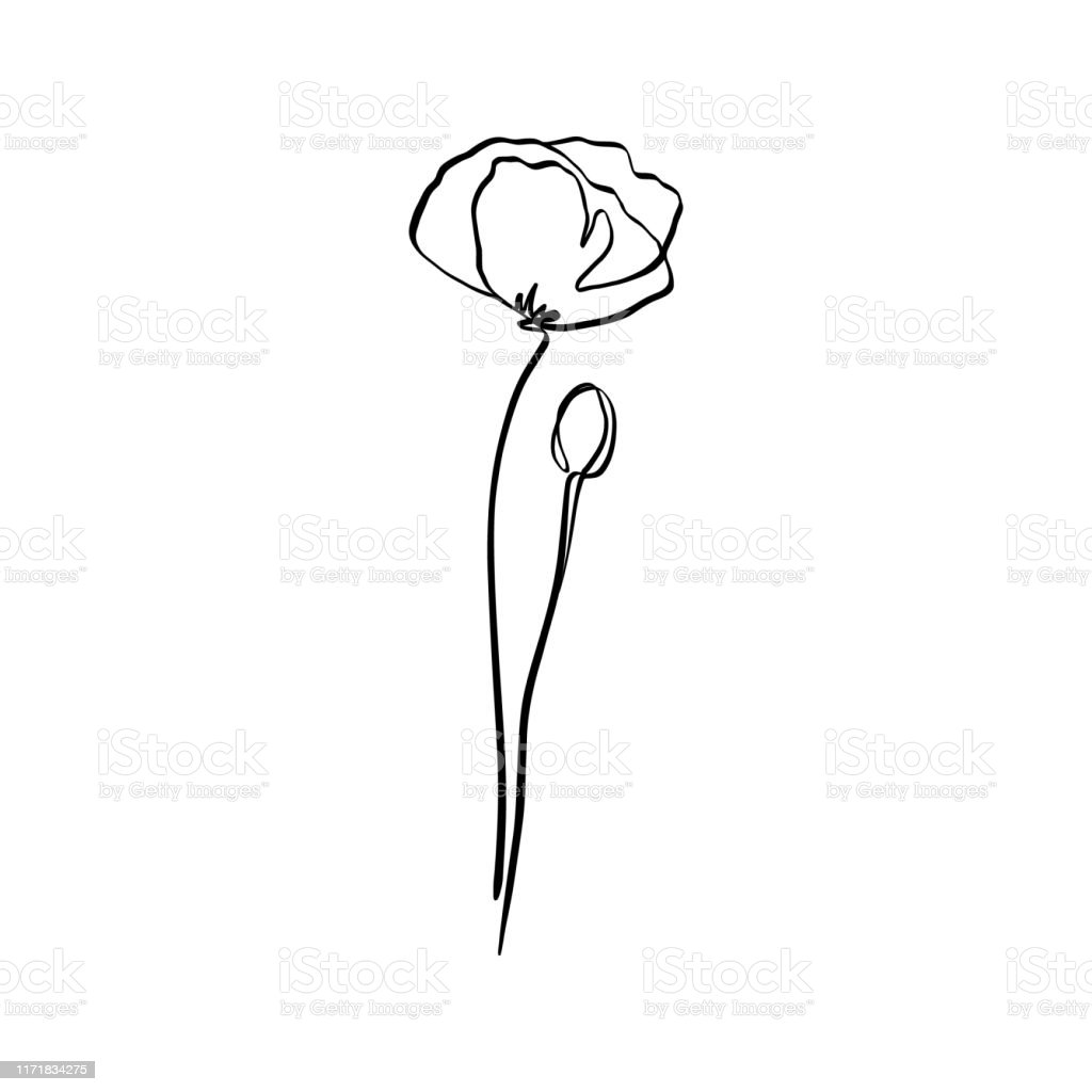 Poppy Flower Is One Line Art Vector Abstract Plant In A Trendy Minimalist Style Stock Illustration Download Image Now Istock