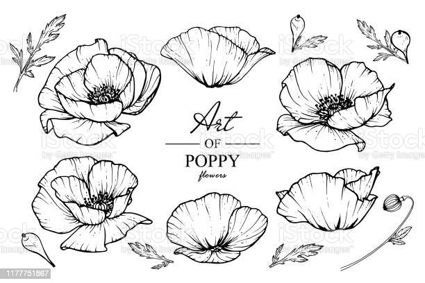 Poppy flowers drawing vector id1177751867?b=1&k=6&m=1177751867&s=612x612&h=ghd bcpazlykbdoqmskd  x zqptpuam2td935lp1l4=