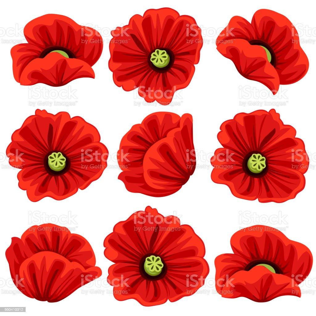 Haşhaş çiçekleri Icons Set Vektör Botanik Sembollerin Kırmızı çiçek