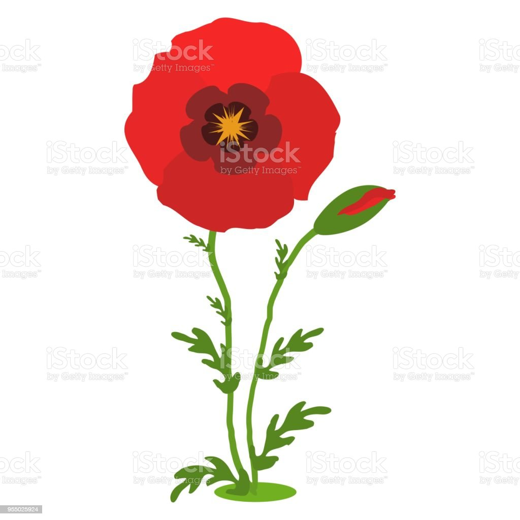Poppy Flowers Red Poppies With Stems On White Background Vector