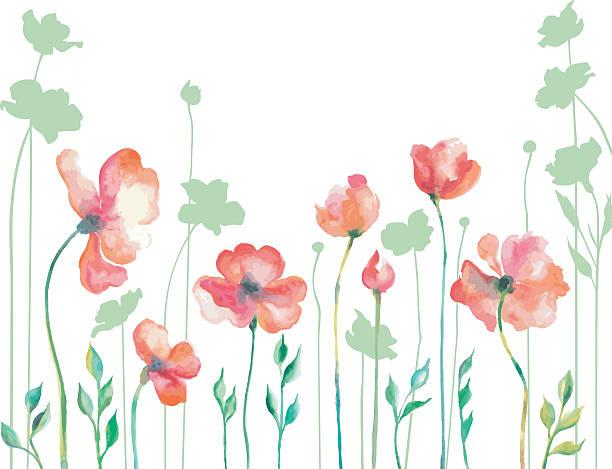 Mohn Blumen  – Vektorgrafik