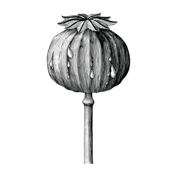 Opium Art Royalty Free Op...