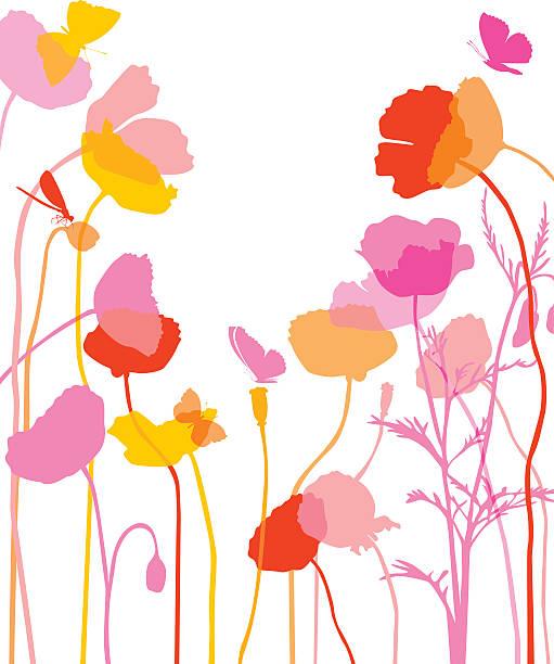 Poppy illustration – Vektorgrafik