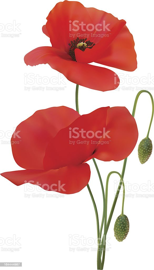 Poppy scarlet colour vector art illustration