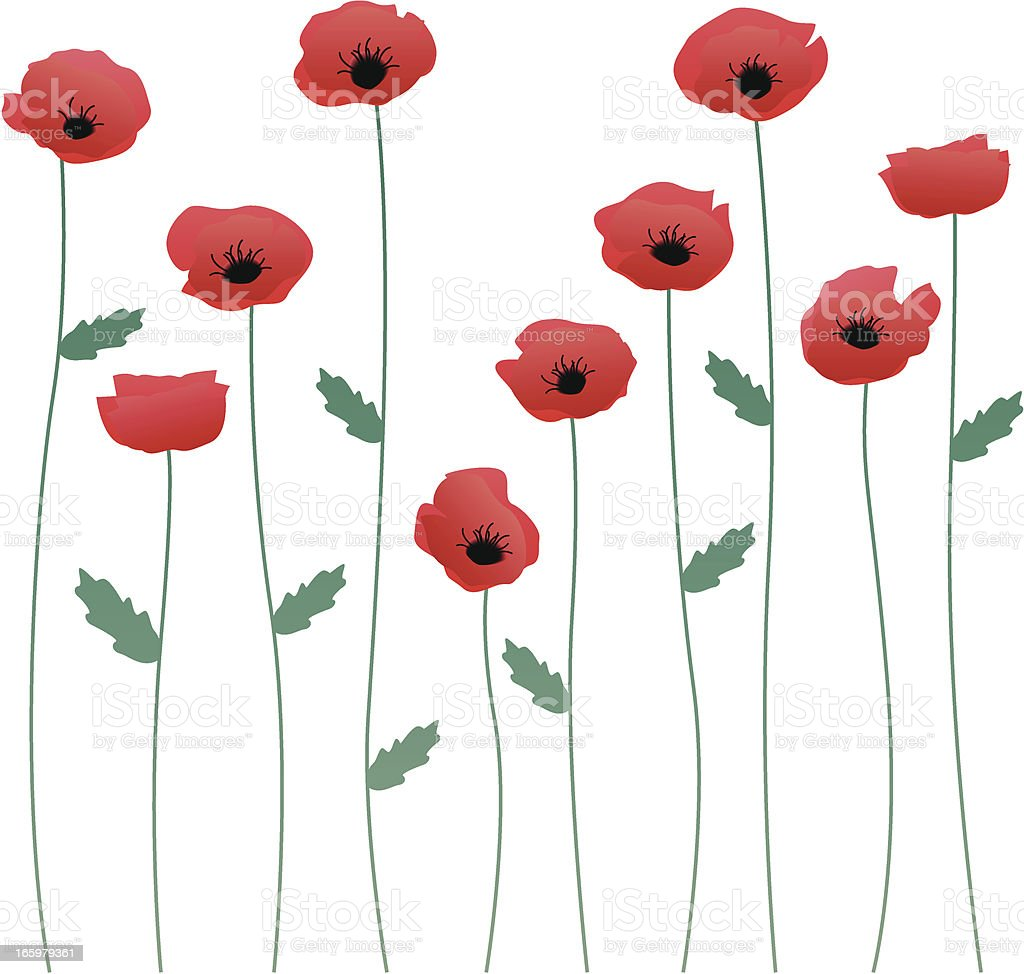Poppy stems vector art illustration