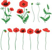Red Poppy. ZIP contains AI format, PDF and jpeg.