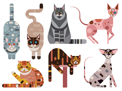 Popular Cat Breeds Geometric Set in Flat