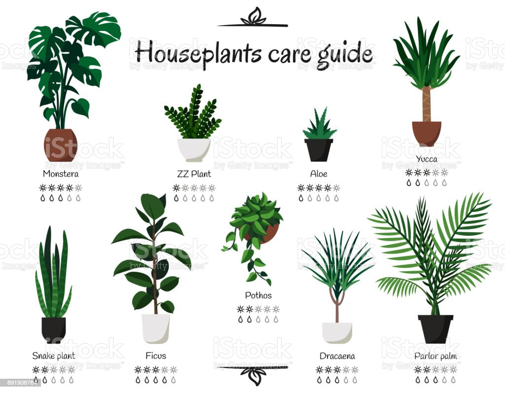 Popular, common houseplants care guide. Vector isolated collection of various indoor ornamental plants with watering and lighting norms royalty-free popular common houseplants care guide vector isolated collection of various indoor ornamental plants with watering and lighting norms stock illustration - download image now