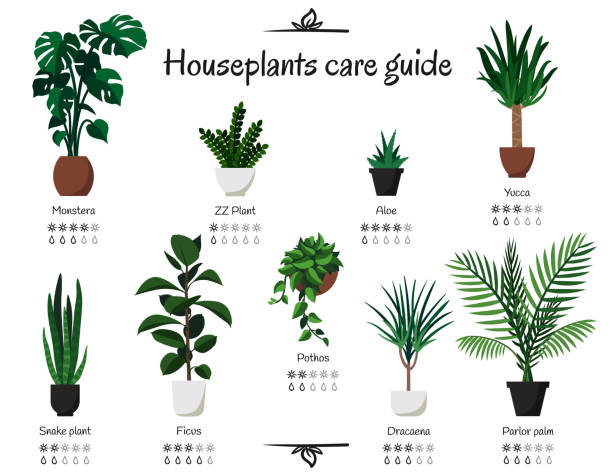 Best Houseplant Illustrations, Royalty-Free Vector Graphics ... on fern-like houseplants, big houseplants, pruning houseplants, my houseplants, identifying palm houseplants, names of different houseplants, people showing houseplants, vine houseplants, popular houseplants, artificial houseplants, silk houseplants, common succulent houseplants, growing lilies as houseplants,