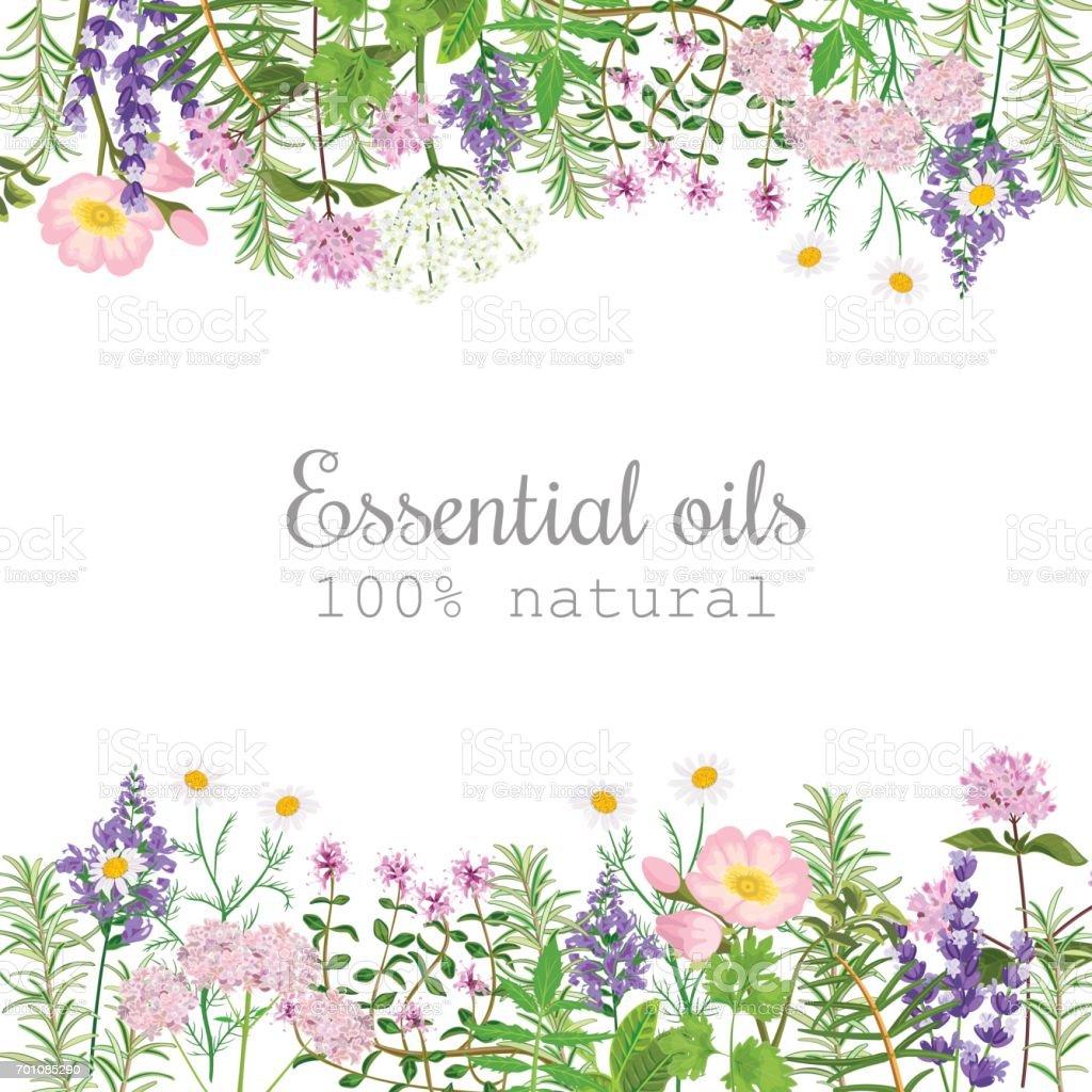 人気のある精油植物ラベル セットです。テキストとバッジします。ペパーミント、ラベンダー、セージ、メリッサ、ローズ、ゼラニウム、カモミール、 ベクターアートイラスト