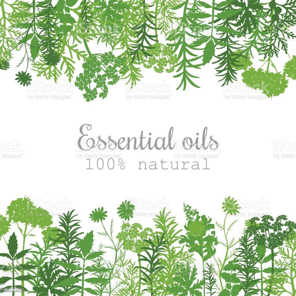 Aceite esencial de la popular etiqueta de plantas situado en el verde. Plano - ilustración de arte vectorial