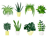 Vector set of indoor plants and flowers in pots. Modern and trendy home decor