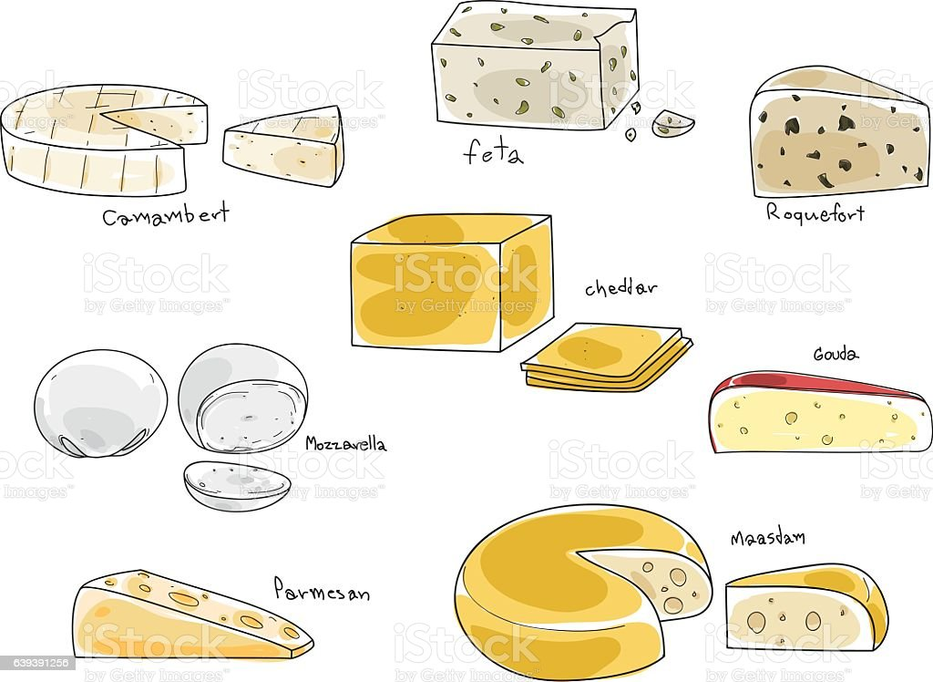 popular kind of cheese vector set hand drawn art illustration vector art illustration