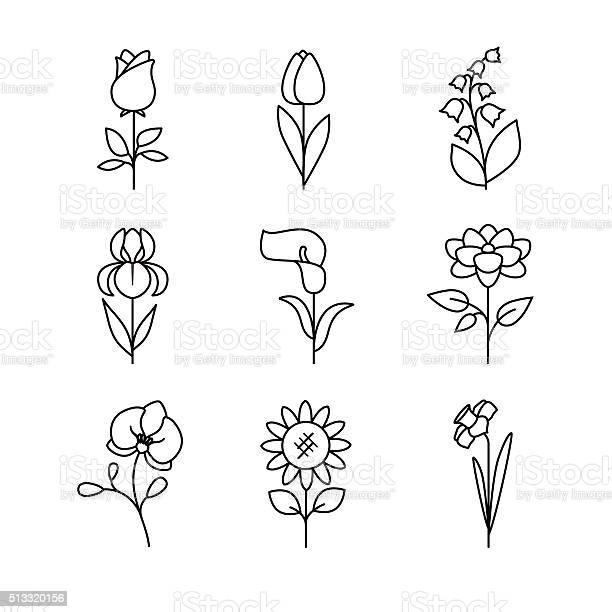 Popular wedding flowers blossoming vector id513320156?b=1&k=6&m=513320156&s=612x612&h=mntirhs2xkj9zdxfftokv5lrdw1o0ebjkumueoqm9sy=