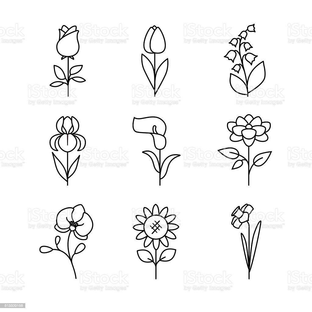 Popular wedding flowers blossoming vector art illustration