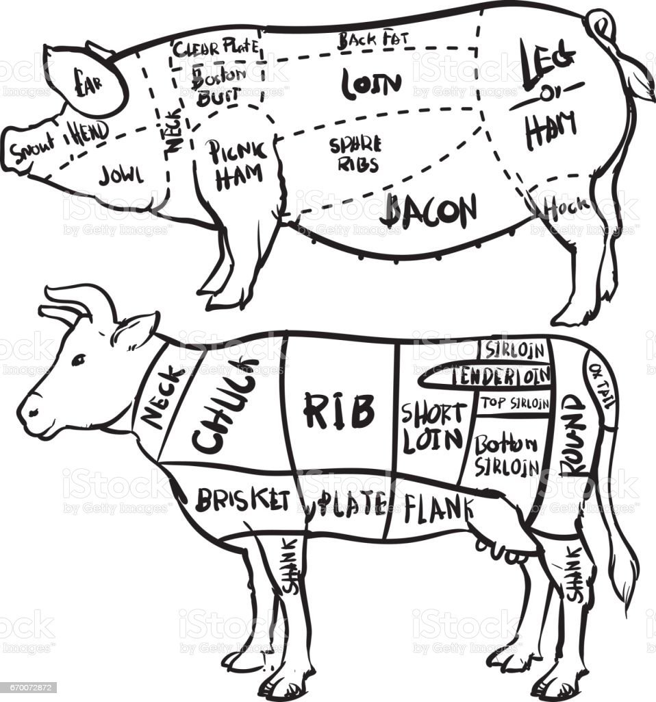Pork And Beef Cuts Diagram And Butchery Set Hand Drawn Outline On ...