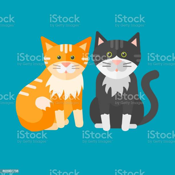 Portrait cat animal pet cute kitten purebred feline kitty domestic vector id855902738?b=1&k=6&m=855902738&s=612x612&h=5rcye6fbawpciiqxdvsh3mxzug 1dlrzvngauyg3u7g=