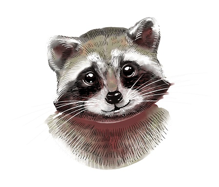 Portrait of a cute raccoon. Color watercolor illustration on a white background