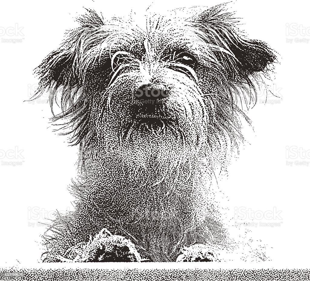 Portrait of a cute Terrier Mix Dog vector art illustration