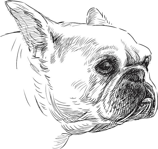 portrait of a french bulldog vector art illustration