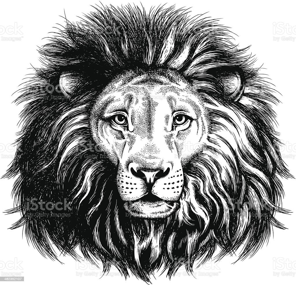 Portrait of a lion vector art illustration