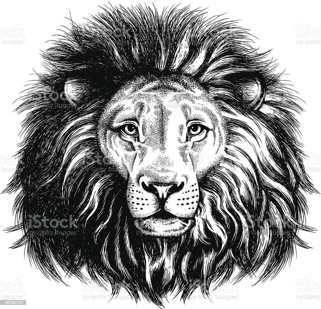 Portrait of a lion vector art illustration