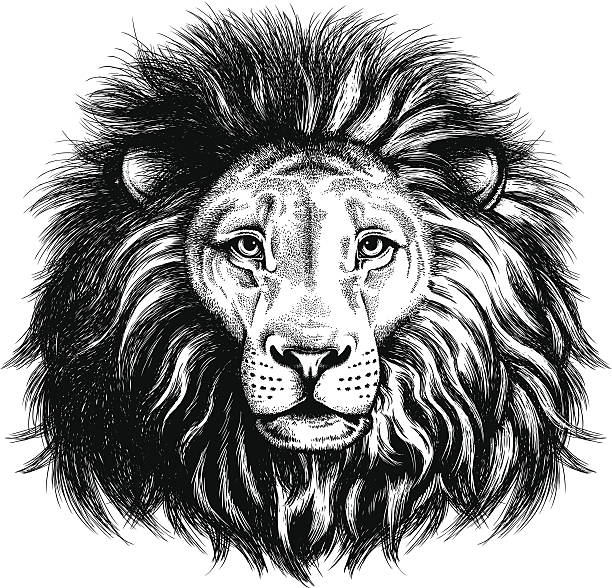 portrait of a lion - lion stock illustrations, clip art, cartoons, & icons