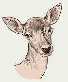 Portrait of a roe deer