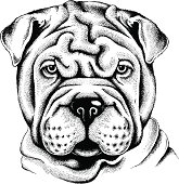 Portrait of a Shar Pei
