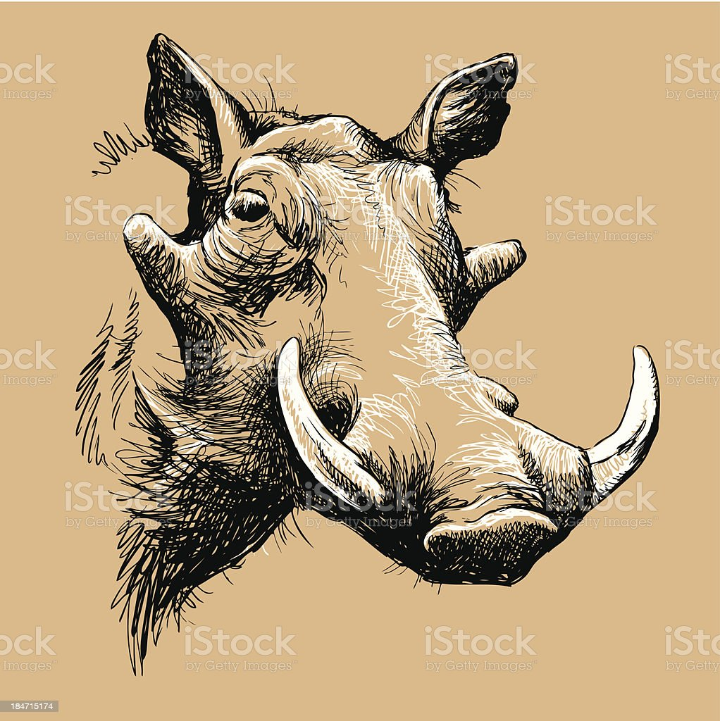 Portrait of a Warthog vector art illustration