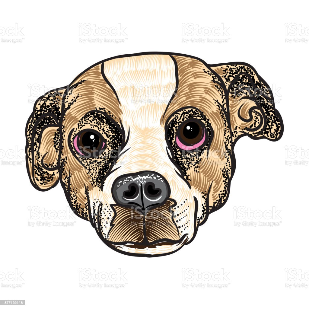 Portrait Of Beagle Puppy Hand Drawn Dog Illustration T Shirt And Tattoo Concept Design Vector Stock Illustration Download Image Now Istock