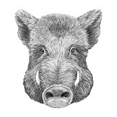 istock Portrait of Boar. Hand-drawn illustration. Vector isolated elements. 1188039746