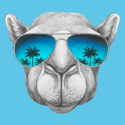 Portrait of Camel with sunglasses. Hand-drawn illustration. Vector isolated elements.