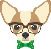 Portrait of chihuahua dog with glasses and bow  tie in flat style.