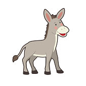 Cute portrait of farm gray donkey on white background