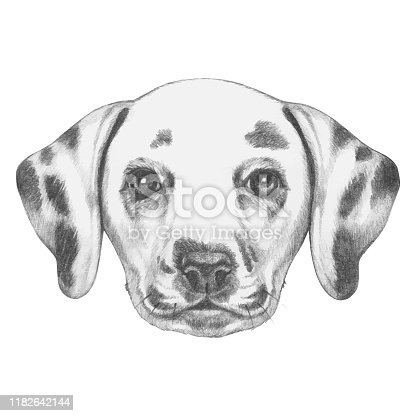 istock Portrait of Dalmatian Dog with floral head wreath. Hand-drawn illustration. 1182642144