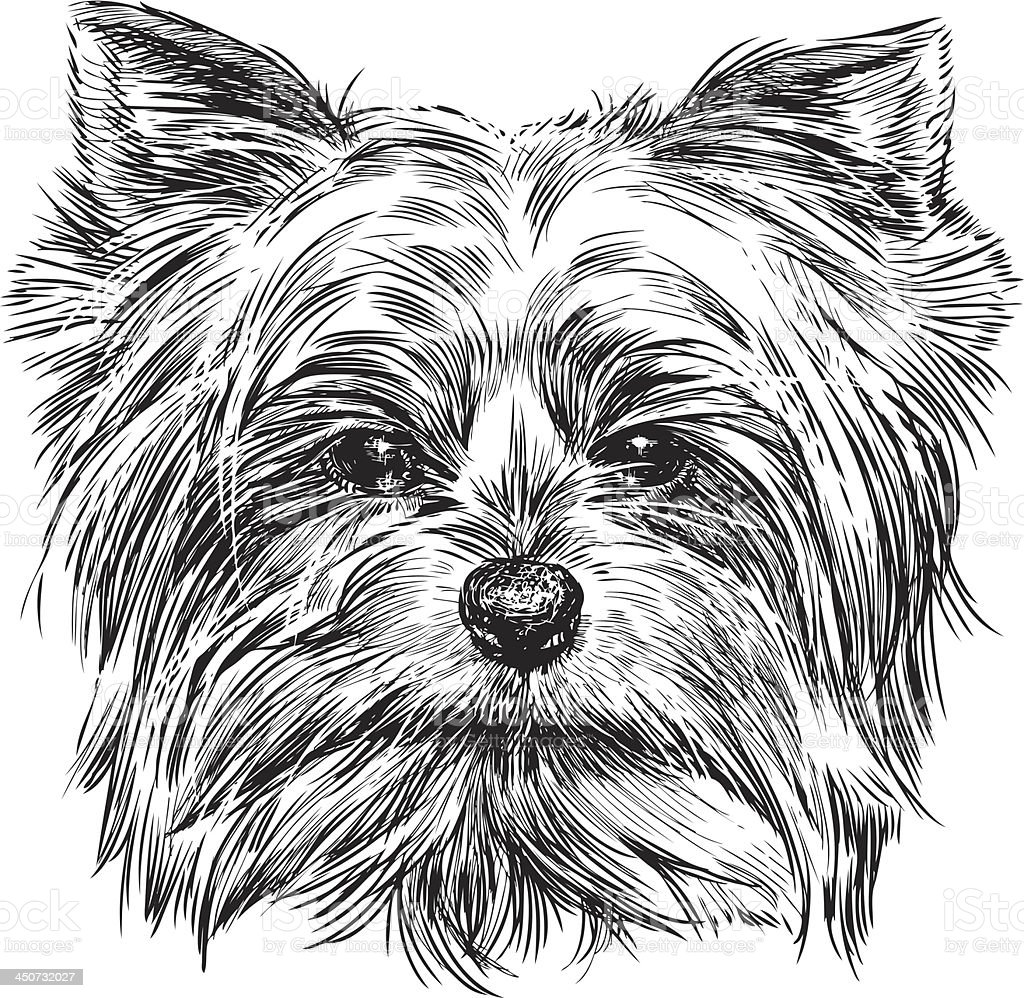 portrait of dog royalty-free portrait of dog stock vector art & more images of animal body part