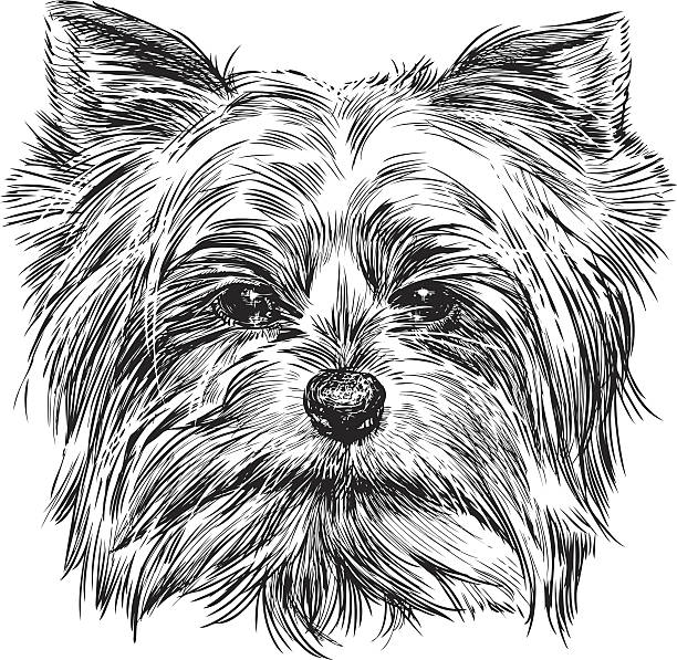 Royalty Free Yorkshire Terrier Clip Art Vector Images
