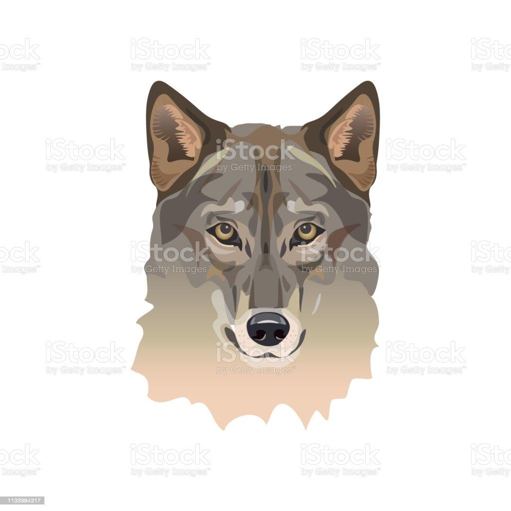 灰色オオカミの肖像 イヌ科のベクターアート素材や画像を多数